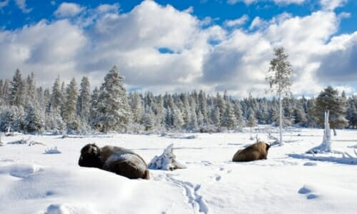 Visiting Yellowstone In Winter Escaping The Midwest