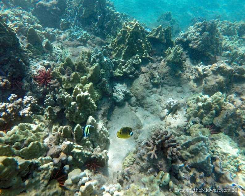 underwater hawaii