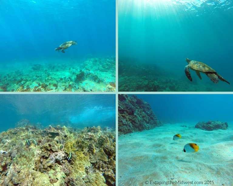 hawaii underwater
