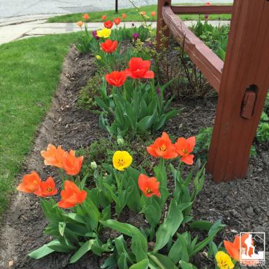 Illinois gardening