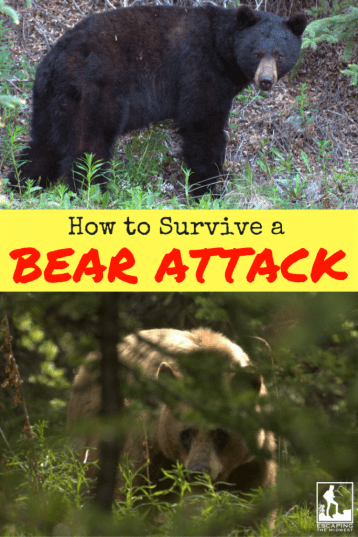 survive bear attack
