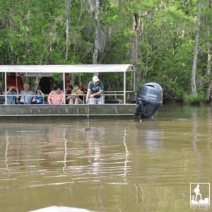 Cajun encounters swamp tour