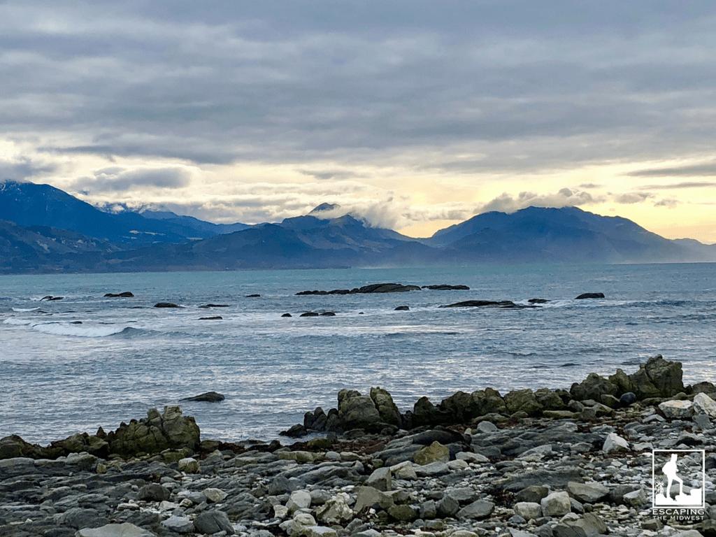 Kaikoura Point Kean Seal Colony