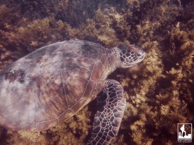 Hamilton Island Australia Whitsundays