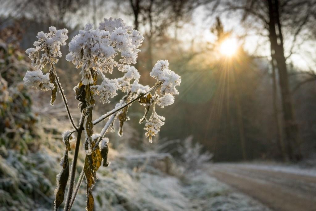 winter blooming houseplants