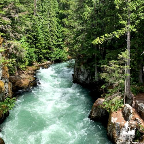 Whistler Canada cheakamus river
