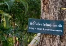 Chiang Mai-1117