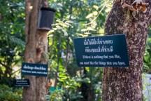 Chiang Mai-1118
