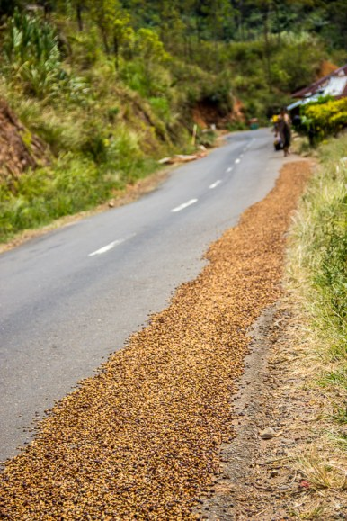 Drying coffee beans on the road