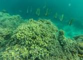 Good diving on Mantigue Island.