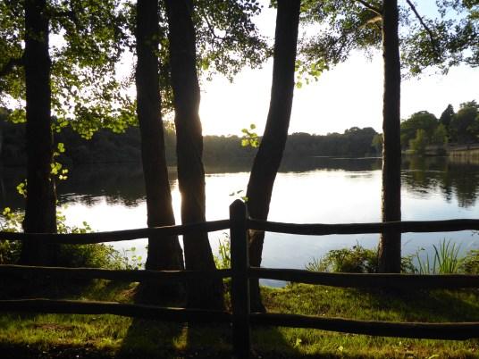 Obelisk Pond through trees