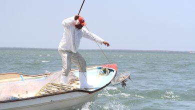 Photo of Pescadores ya podrán capturar jaibas en Sinaloa y Sonora