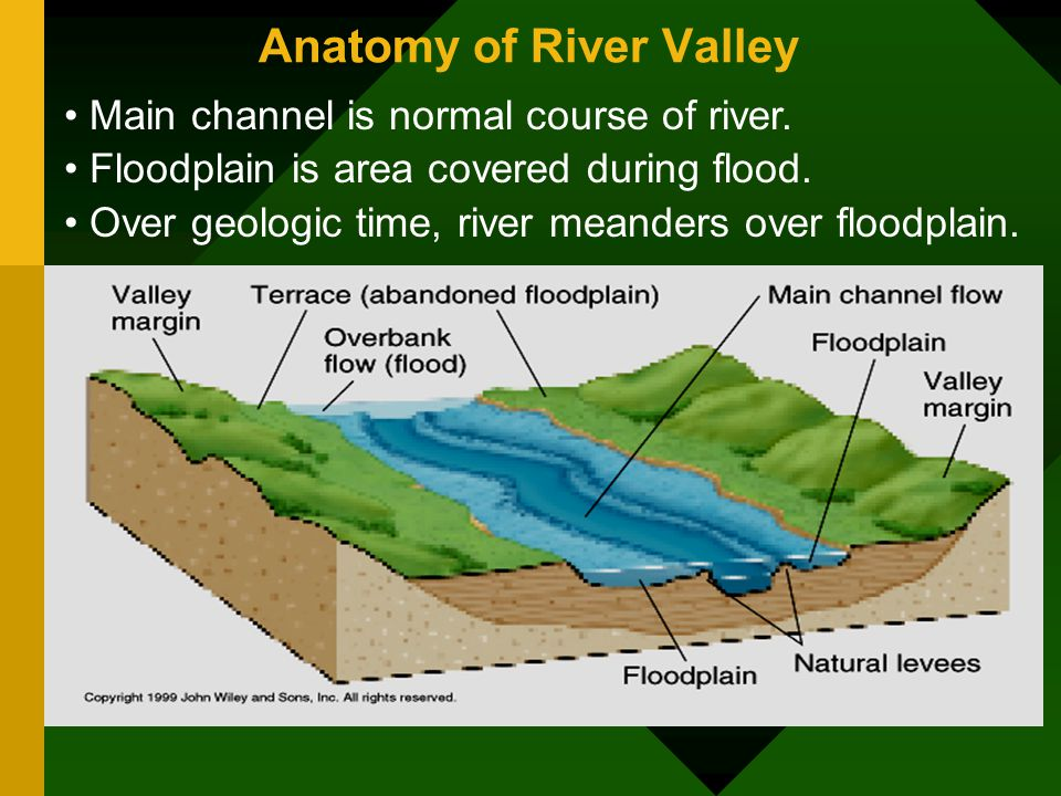 Anatomy of Levees - Eschool
