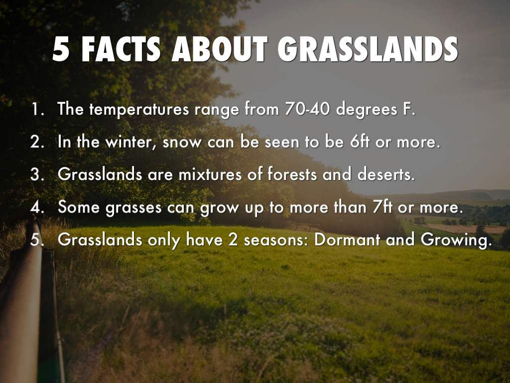 Facts About Grasslands