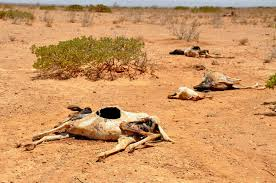 How can we help to reduce drought if we are in it