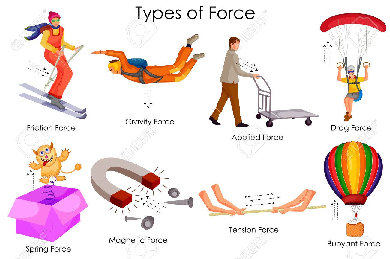 education chart  physics   types  force