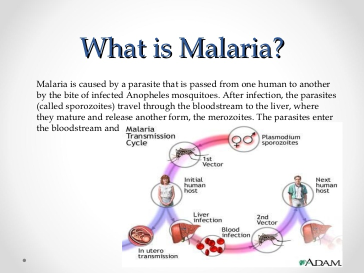 relationship between mosquitoes and malaria medication