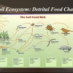 What is soil ecosystem