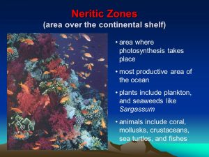 Facts about continental shelf