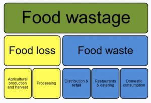 Types of food waste and food losses