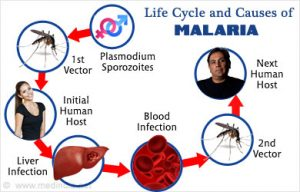 Causes of Malaria