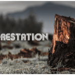 Deforestation Solution