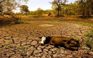 Effects of water shortage