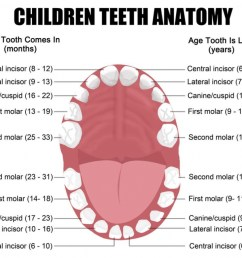 functions and names of the teeth eschool human mouth diagram teeth diagram names [ 1024 x 896 Pixel ]