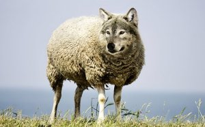 Fables - un loup transformé en mouton