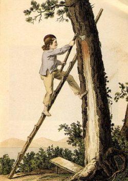 Première exploitation du pinhadar : Gravure de Gustave de Galard, illustrant le gemmage au crot en 1818 à la Teste de Buch (Gironde, Aquitaine, France)