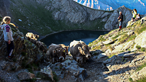Arrivée des troupeaux aragonais à la Bernatoire