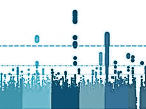 Etude des variations de structure du génome bovin (Doc INRA)