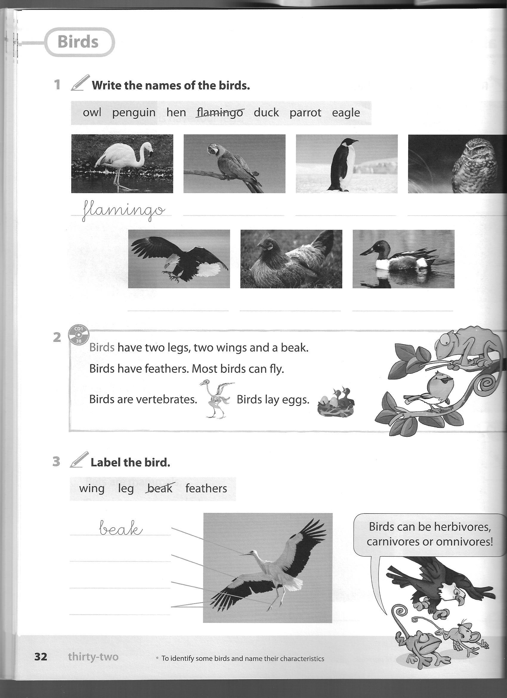 Unit 4 Classification Of Animals Birds