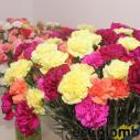 Las flores frescas colombianas 27