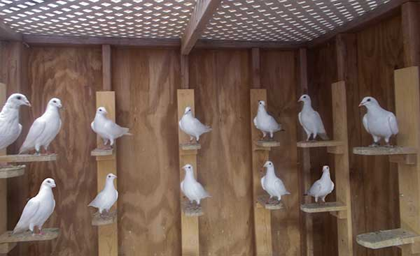 Doves of Love at rest.