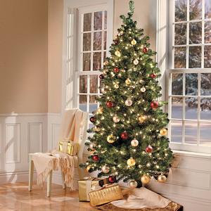 Christmas tree very merry.