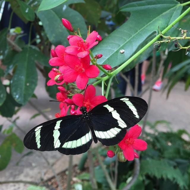 #butterflyjungle @sandiegozoosafaripark.