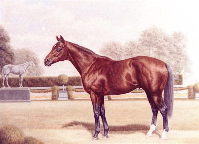 Memorabilia related to Sea Orbit, progeny of the legendary Seabiscuit, is now on view at the Valley Center History Museum.