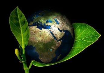 Cinco de Junio: día Mundial del Medioambiente