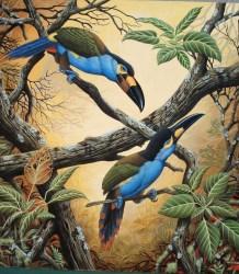 1 -Tucan andino pico laminado
