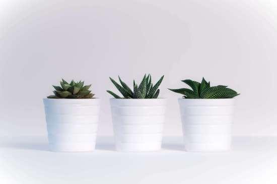 claves de Diseño Web - cactus fondo blanco
