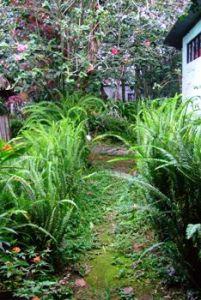 Path through ferns