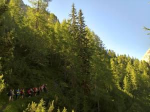 Bosco di conifere sul Sentiero CAI-124