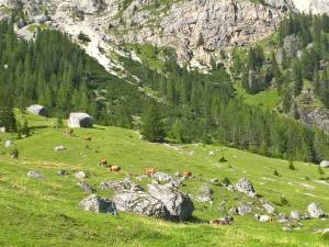 Vacche all' Agriturismo Malga Ciapela