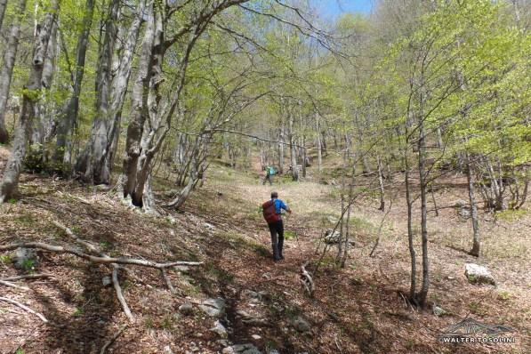 Ripida salita nel bosco verso la selletta