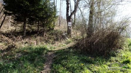 Inizio escursione in bosco