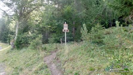 Monte Arvenis ingresso sentiero boschivo