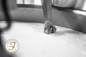 la coagulazione del latte che forma la cagliata