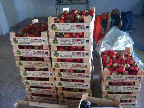cajas fresas