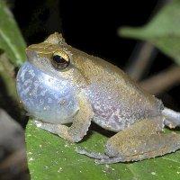 50 Nuevas especies en Papua Nueva Guinea. Con galerías de fotos.